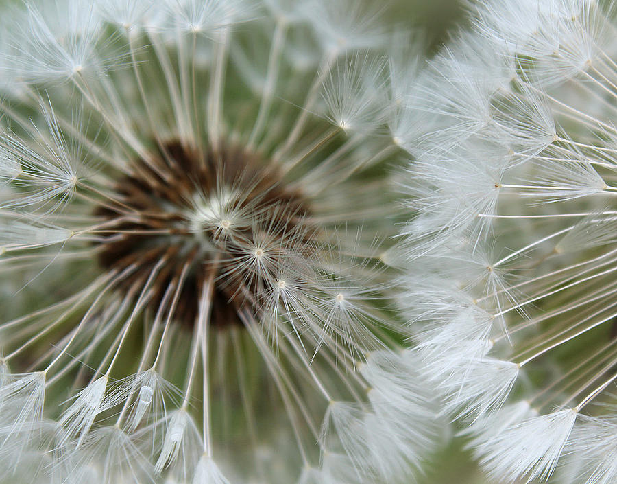 My Divine Nature Photograph