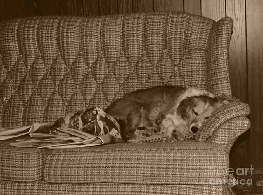 My Dog Sleeping On The Couch Circa 1976 Photograph  - My Dog Sleeping On The Couch Circa 1976 Fine Art Print