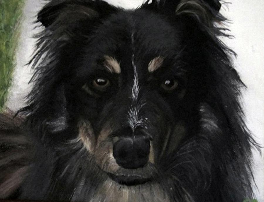 Austrailian Shepard/ Border  Collie Cross.k9 Painting - My Favorite Bud by Sharon Duguay