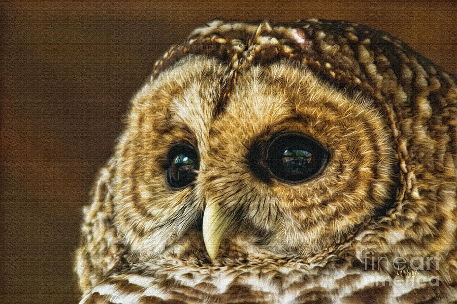 My What Big Eyes You Have Photograph  - My What Big Eyes You Have Fine Art Print