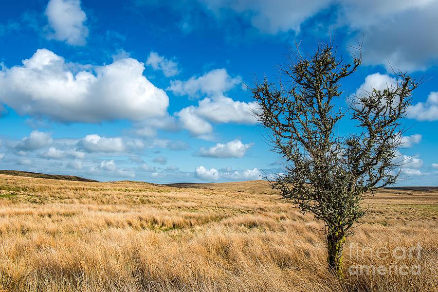 Mynydd Hiraethog Photograph