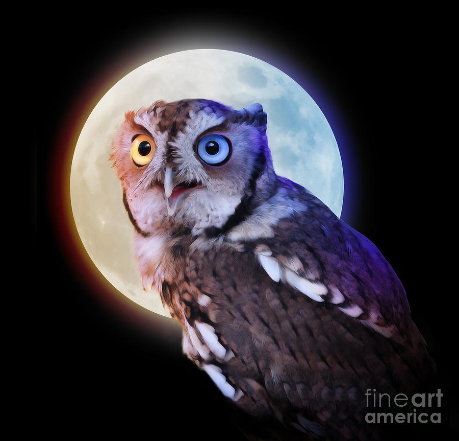 Mysterious Owl Animal At Night With Full Moon Photograph