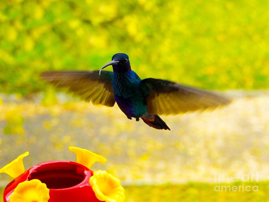 Bird Photograph - Na Na Na Na Na Na by Al Bourassa