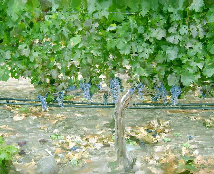 Napa Valley Painting - Napa Vineyard by Paul Tagliamonte
