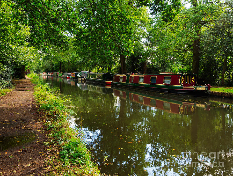 Narrowboats Moored On The Wey Navigation In Surrey Photograph  - Narrowboats Moored On The Wey Navigation In Surrey Fine Art Print
