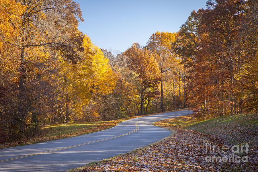 Natchez Trace Photograph