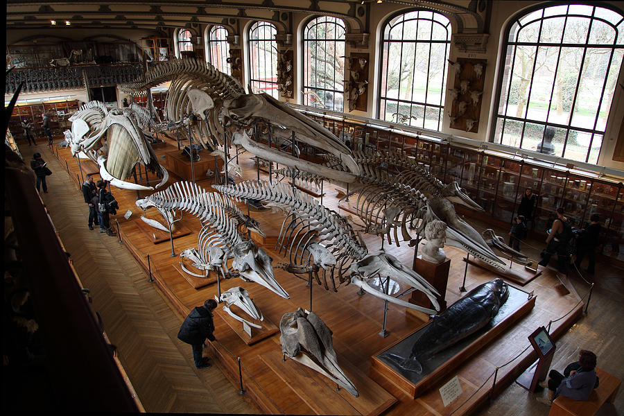 Natural History Museum Paris Admission Fee