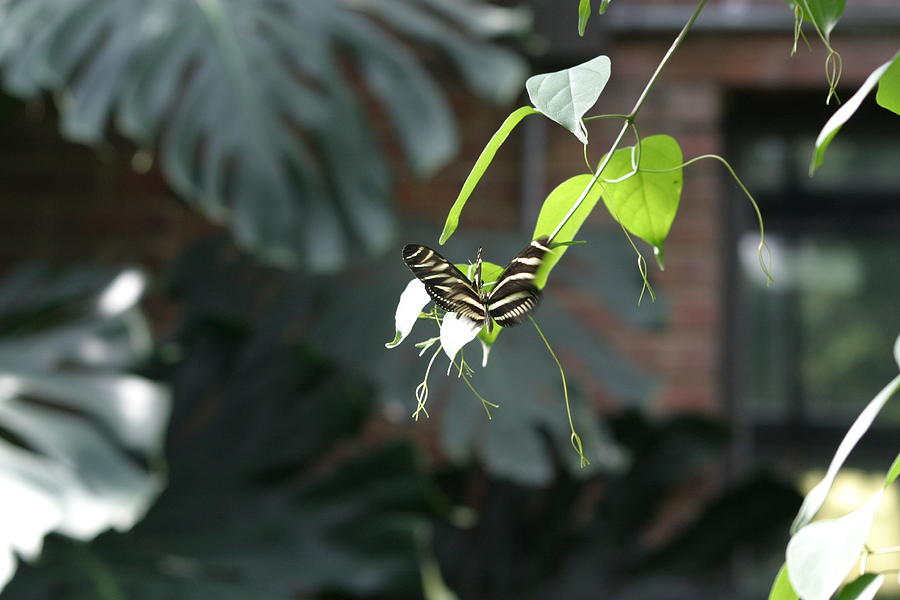 National Zoo - Butterfly - 12124 Photograph  - National Zoo - Butterfly - 12124 Fine Art Print