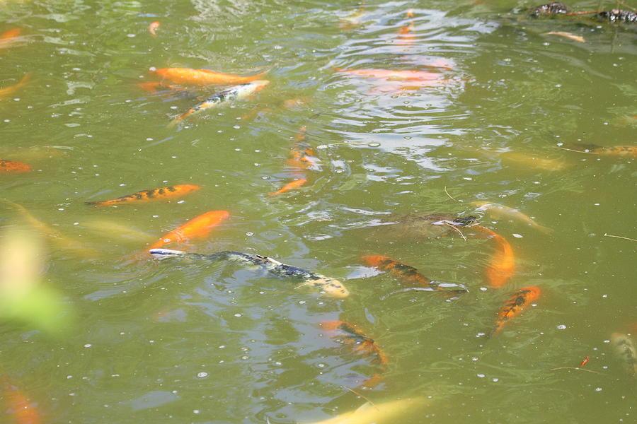 National Zoo - Fish - 011317 Photograph