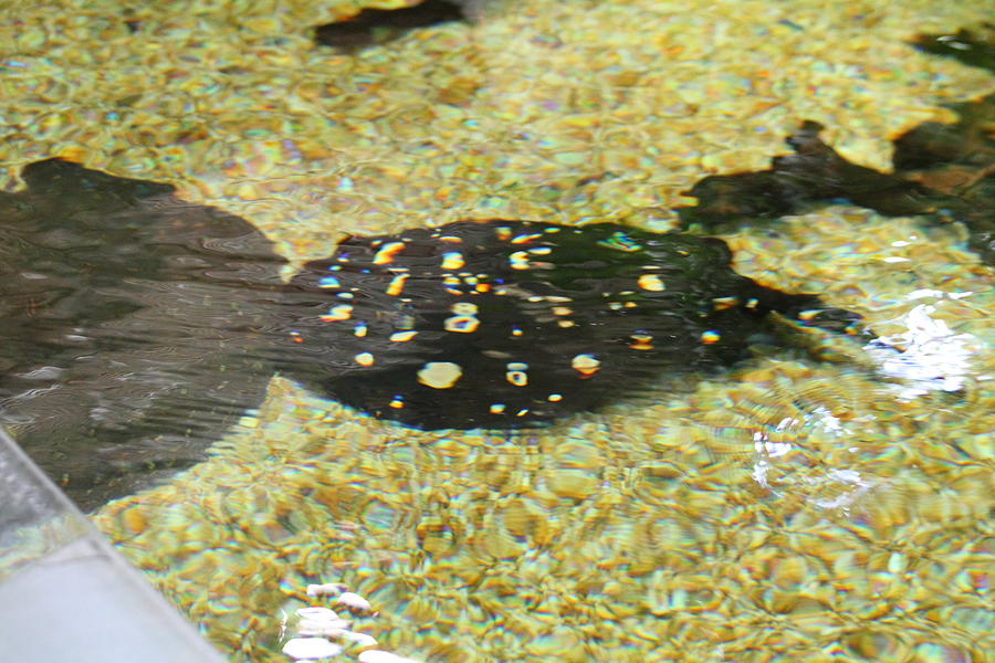 National Photograph - National Zoo - Fish - 01138 by DC Photographer