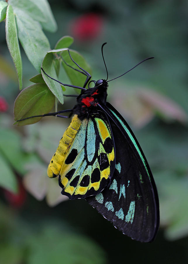 Butterfly Photograph - Natural Awakenings by Juergen Roth