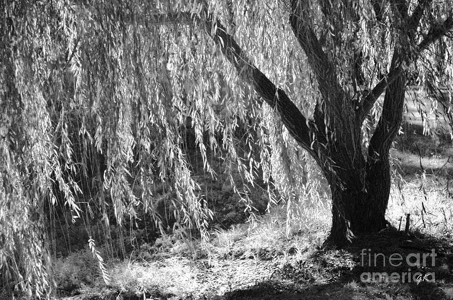 Natural Screen Photograph