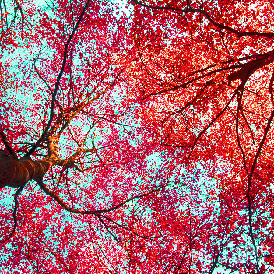 Nature Abstract #2 - Colorful Red And Blue Abstract Nature Fine Art Photograph - Digital Painting  Photograph