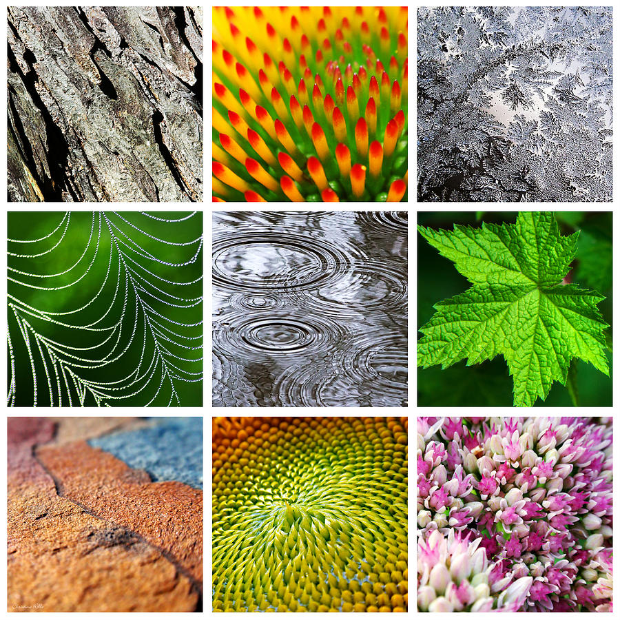 Nature Patterns And Textures Square Collage Photograph