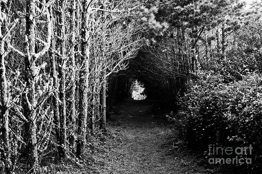 Nature Pictures: Black And White Nature Pictures For Sale