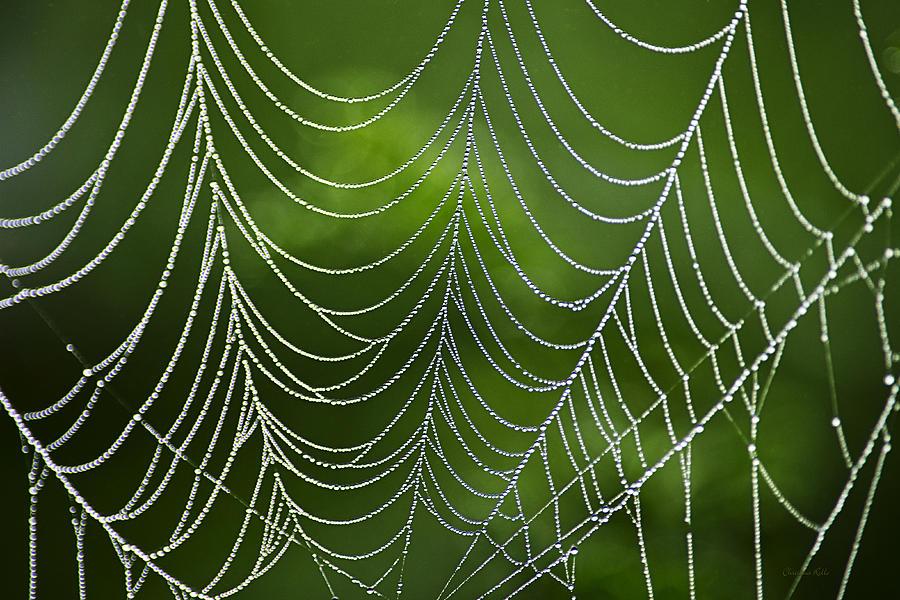 Natures Best Green Abstract Art Photograph