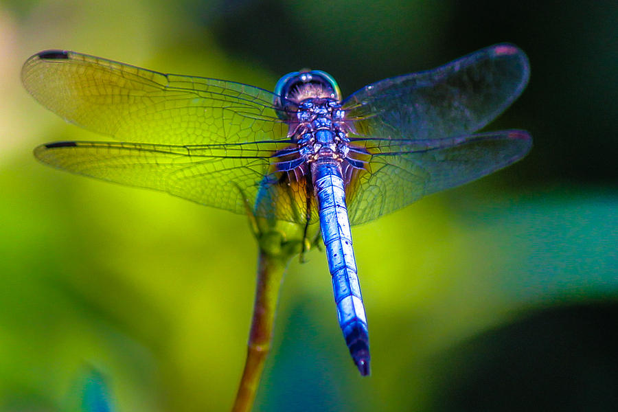 Dragonfly Photograph - Natures Jewels by Lesley Brindley