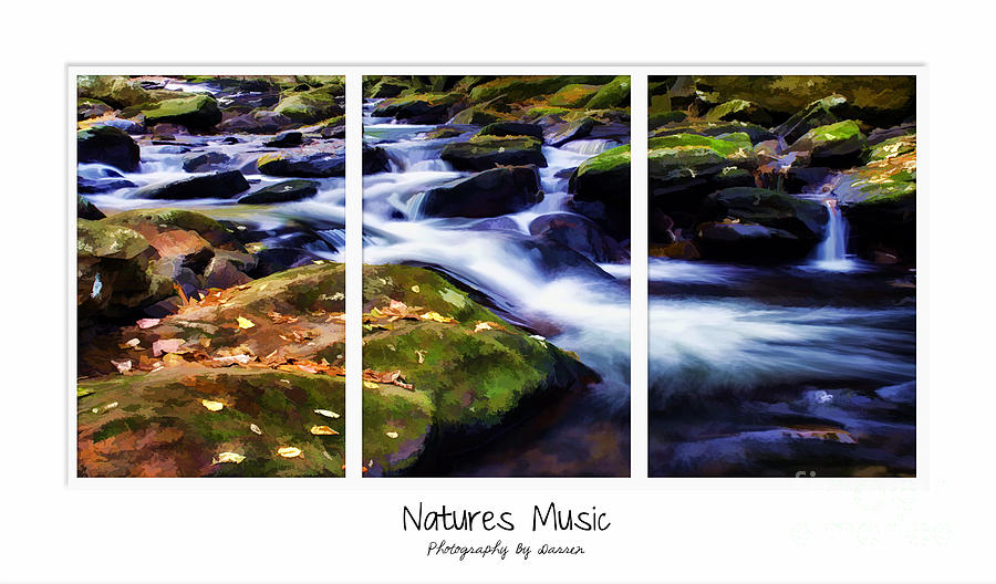 Natures Music Photograph