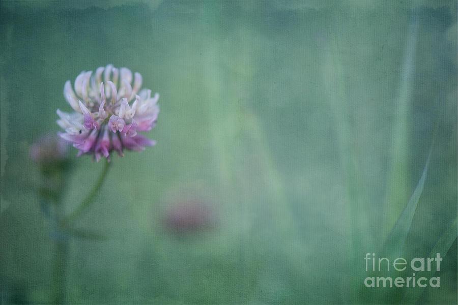Clover Photograph - Natures Scent by Priska Wettstein
