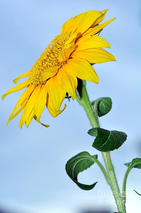 Photography Photograph - Natures Sunshine by Kaye Menner