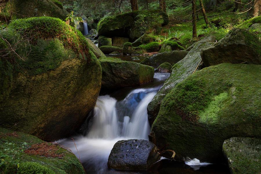 near the Brocken, Harz Photograph