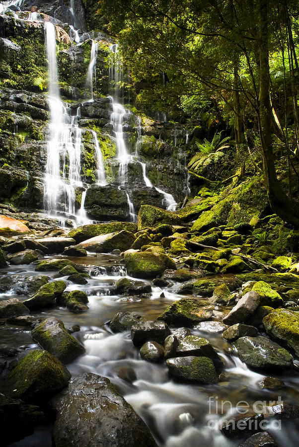 Clean Photograph - Nelson Falls Tasmania by Tim Hester