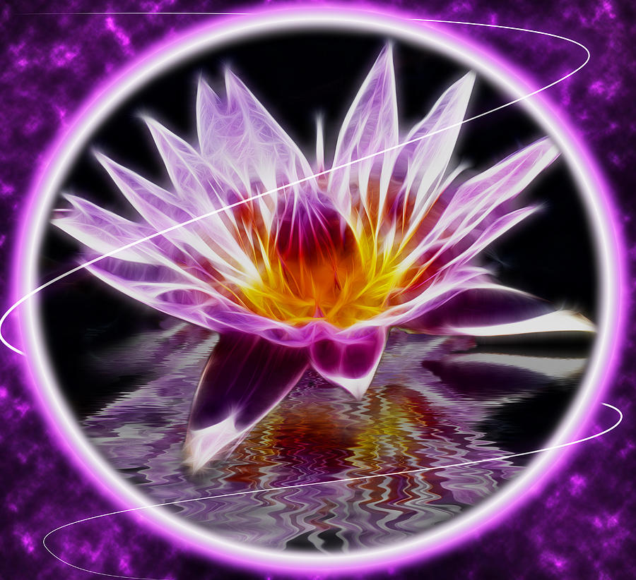 Neon Lotus Photograph