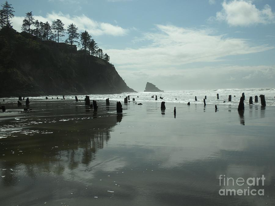 Neskowin Oregon Ghost Forest By Sarah Bettey