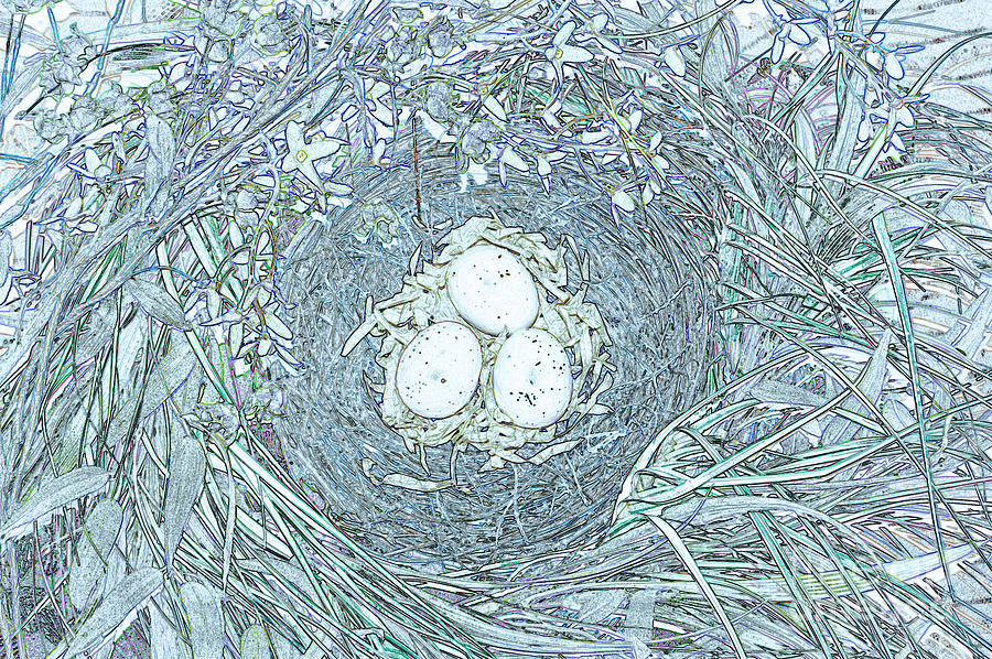 Nest Eggs By Jrr Photograph