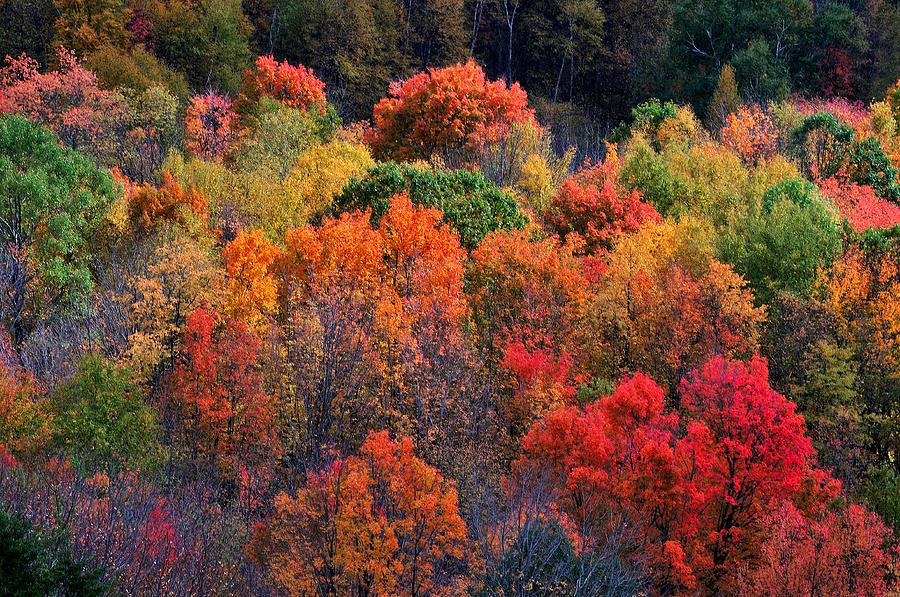 New England Foliage Burst Photograph