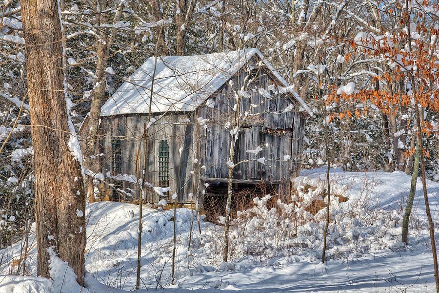New England Winter Woods Photograph