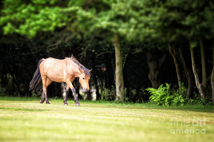 Forest Photograph - New Forest Pony by Jane Rix