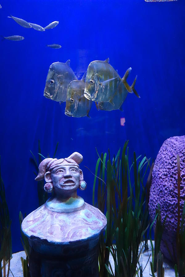 Fish Photograph - New Orleans Aquarium by Louis Maistros