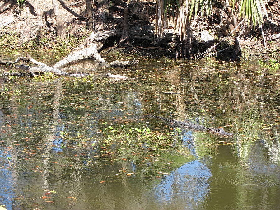 New Photograph - New Orleans - Swamp Boat Ride - 121251 by DC Photographer