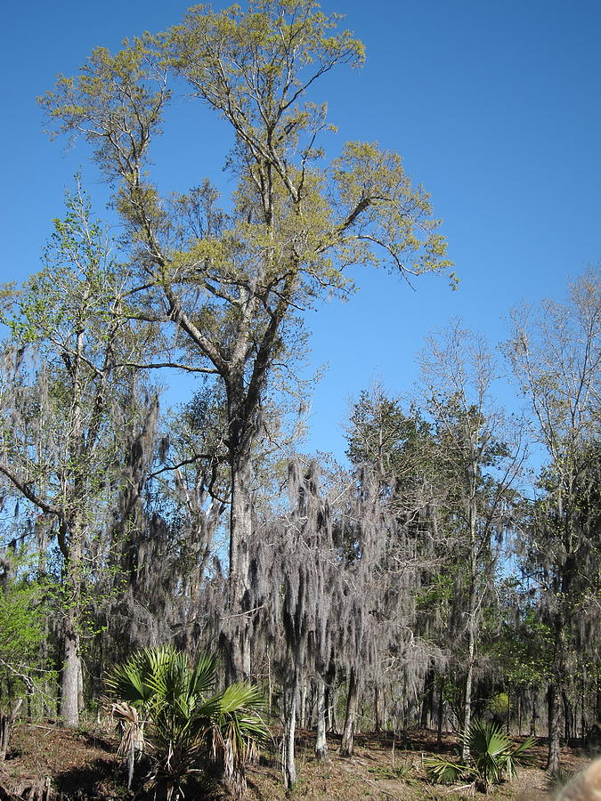 New Orleans - Swamp Boat Ride - 121265 Photograph