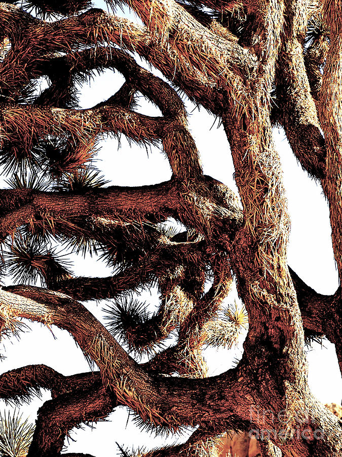 Close up of joshua tree branches photograph by toula for Large photographic prints for sale