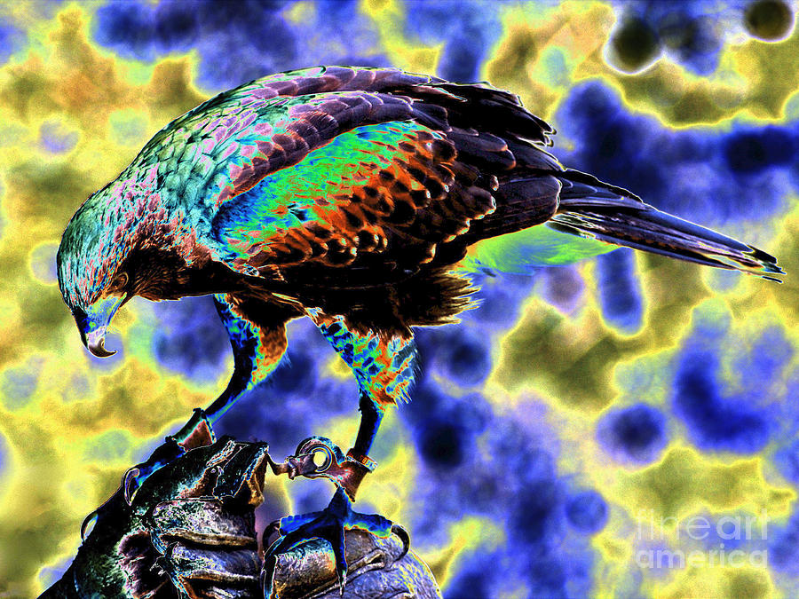 New photographic art print for sale pop art bird of prey for Large photographic prints for sale