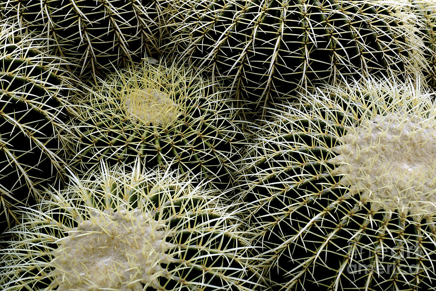 New photographic art print for sale round cacti photograph for Large photographic prints for sale