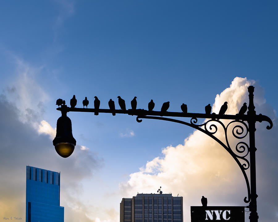 New York Photograph - New York City Is For The Birds by Mark E Tisdale