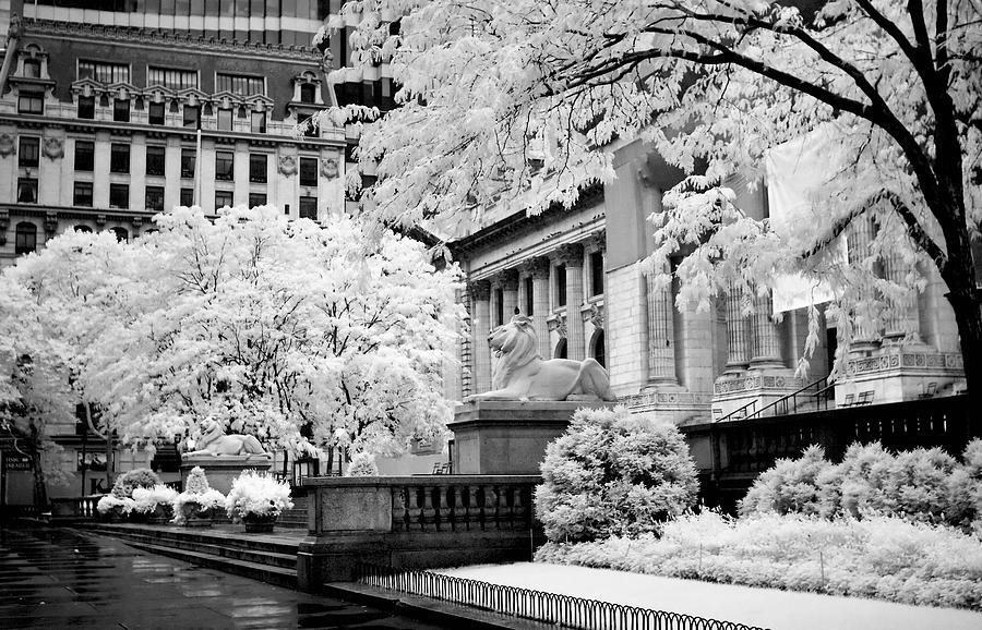 New York Public Library Ir Photograph