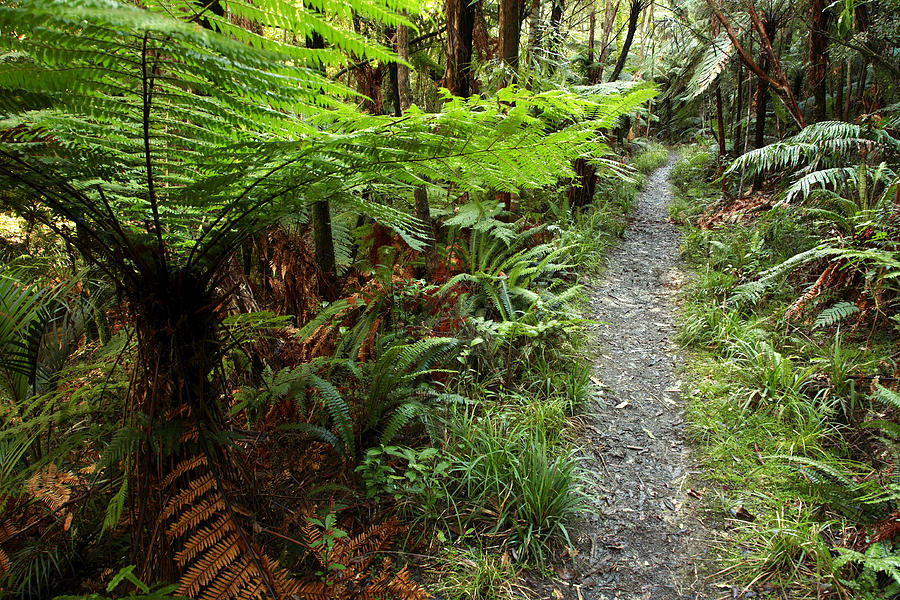 Forest Photograph - New Zealand Forest by Les Cunliffe