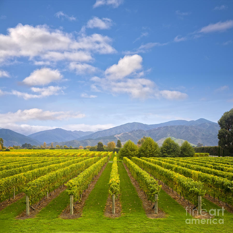 new vineyard chat Get the latest sales tax rates for new vineyard maine and surrounding areas rates are updated monthly sales tax rates provided by avalara.