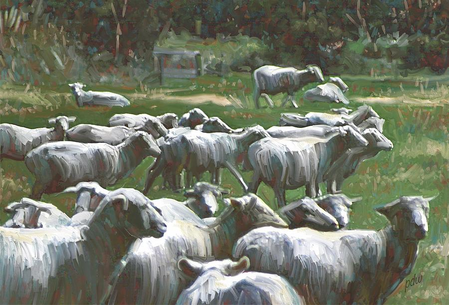 Animals Painting - New Zealand Sheared Sheep by Philip White