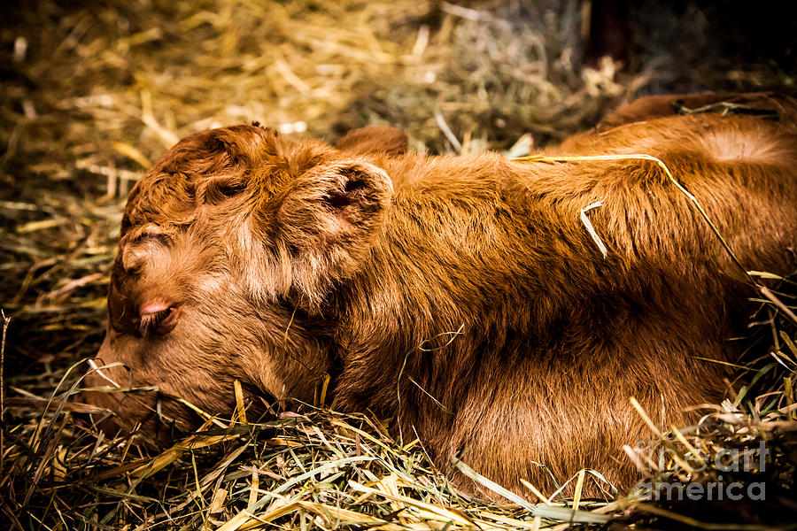 Newborn Nap Photograph