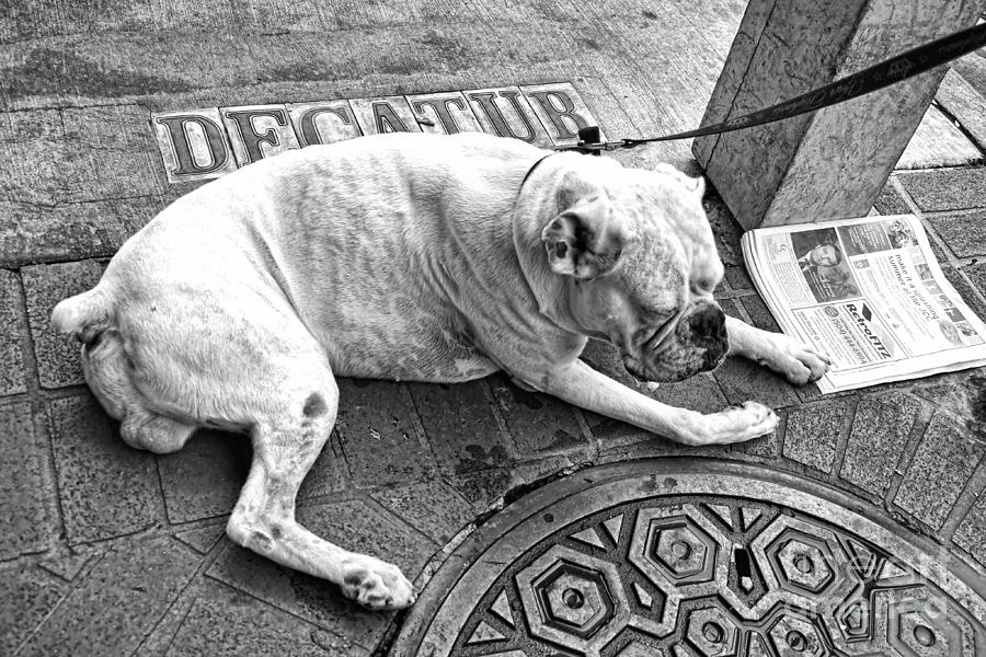 Dog Photograph - Newsworthy Dog In French Quarter Black And White by Kathleen K Parker