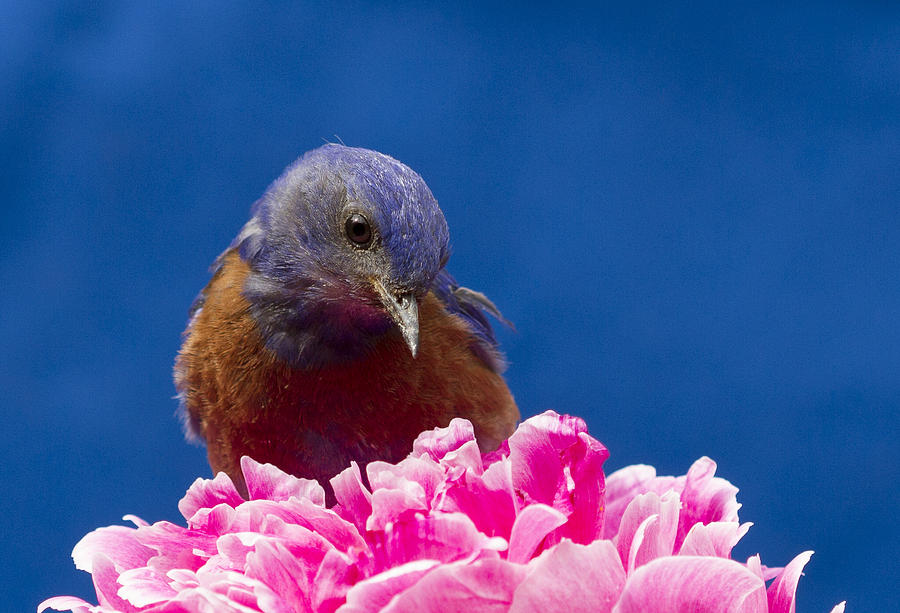 Animals Photograph - Nice Flower by Jean Noren