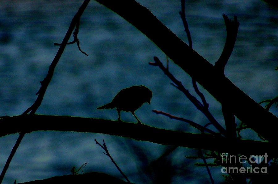 Night Bird Photograph  - Night Bird Fine Art Print