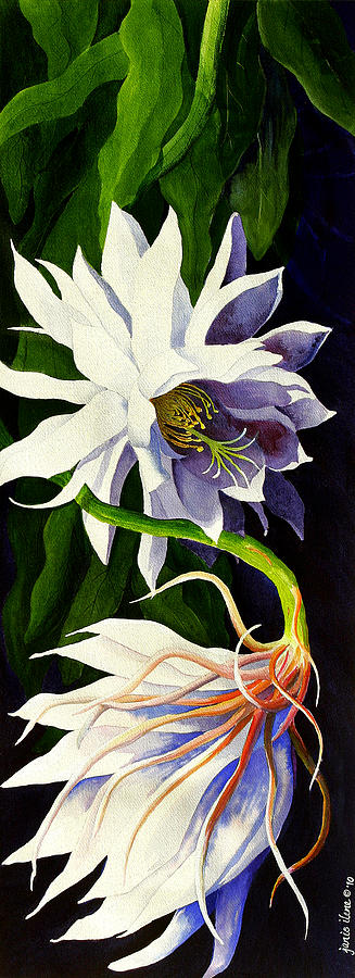 Night Blooming Cereus Painting  - Night Blooming Cereus Fine Art Print