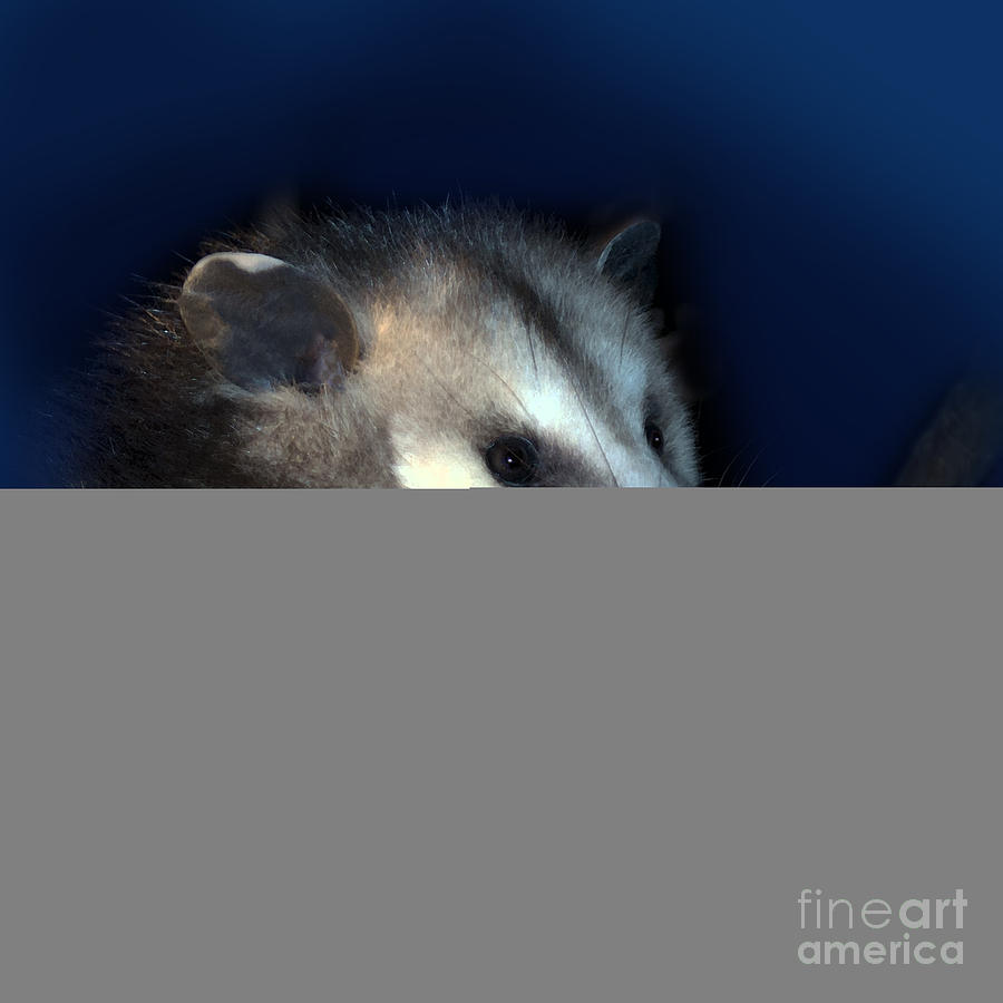 Night Creature Photograph
