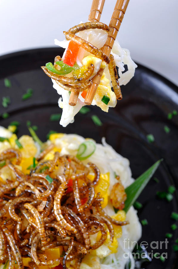 Noodles Photograph - Noodles With Mealworms by Emilio Scoti